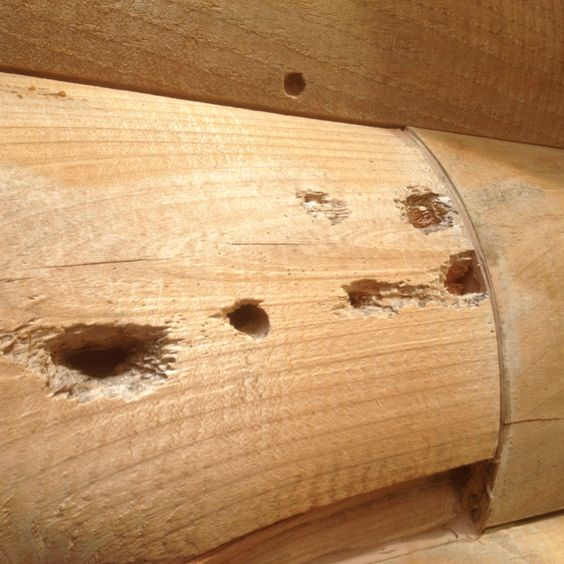 Carpenter Bee Wood Damage Signs