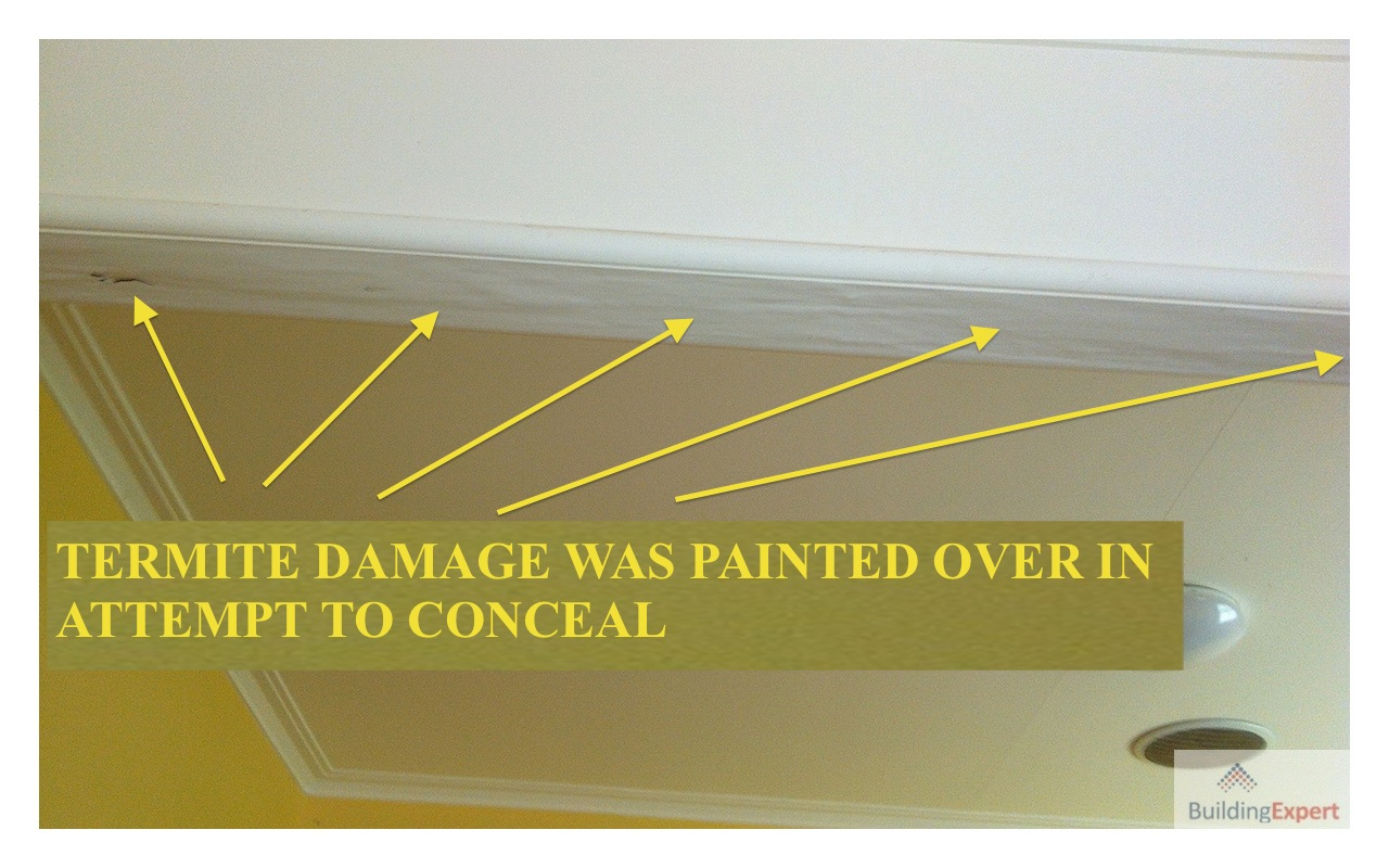 Termite Damage Signs And Control Ceiling Foundation