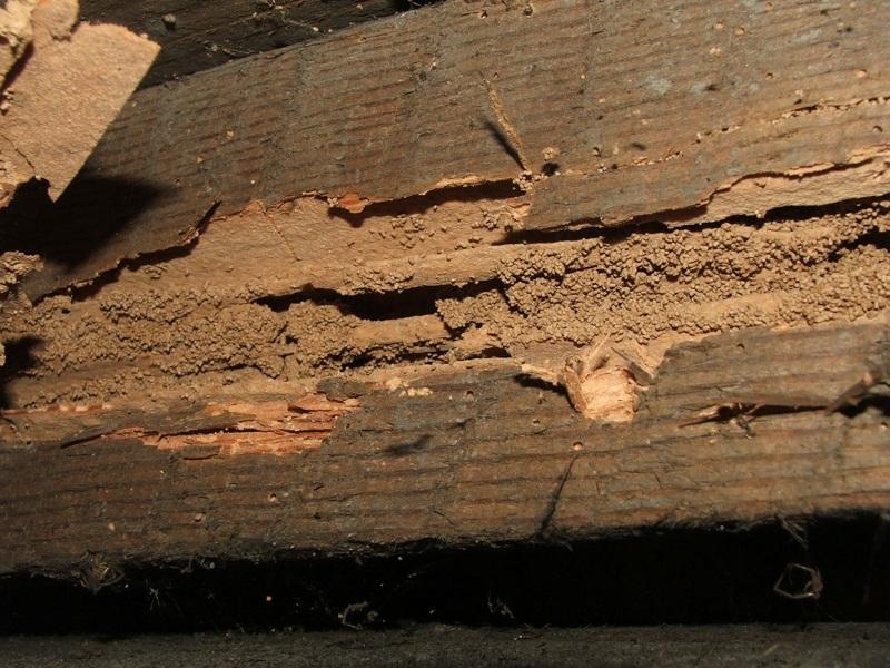 Termite Treatment Wood Furniture